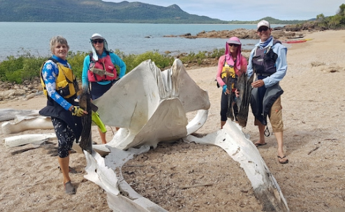 Whale Remains at Balls Bay
